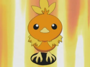 May Torchic-1- (1).png